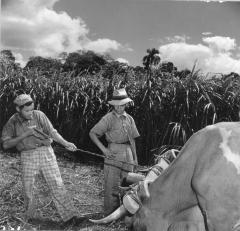 Farm Workers with Ox