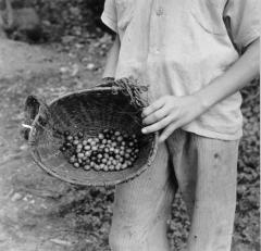 Farm Worker with Crops