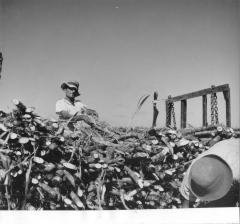 Migrant Worker Performing Farm Work
