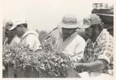 Migrant Farm Workers