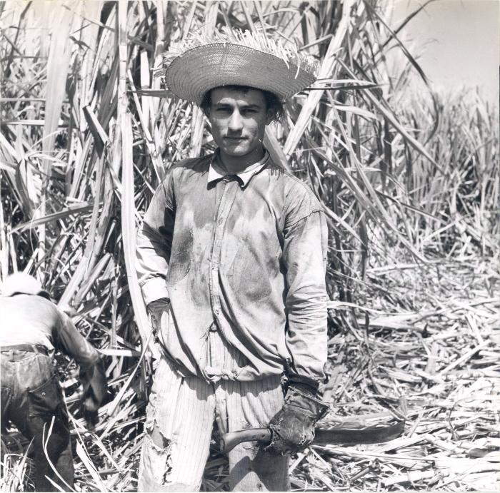 Agricultural worker in sugar cane field