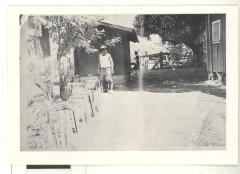 Man in a Hawaiian sugar cane plantation