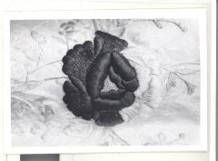 Magnified photo of shawl displayed in the Boricua Hawaiiana exhibit