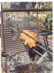 Pig roast hosted by Albert Montalbo