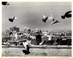 Teenage Boys on a Rooftop with Pigeons